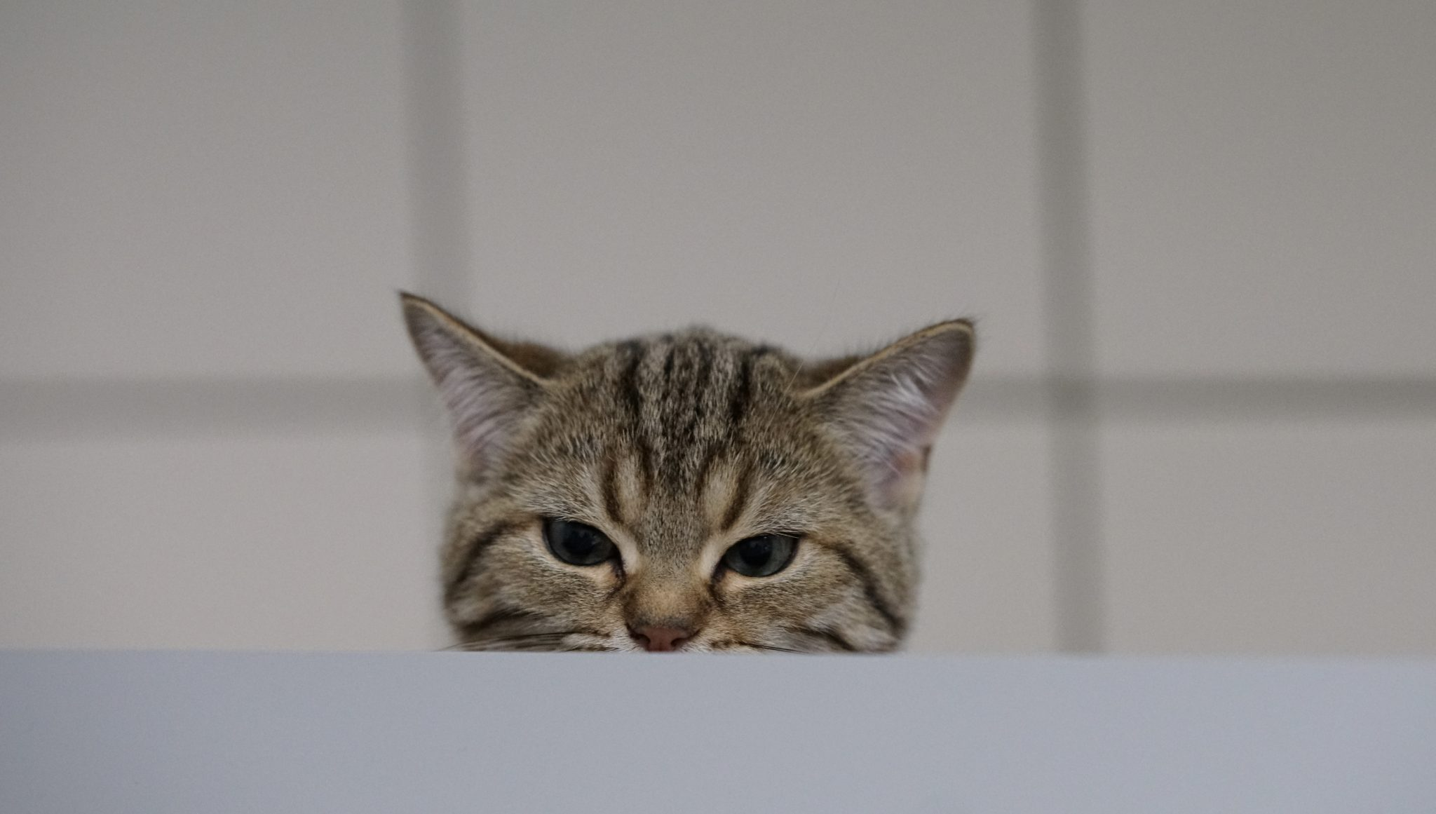 Kastration Katze