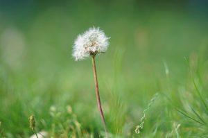 Sommer, Parasiten und Blüten